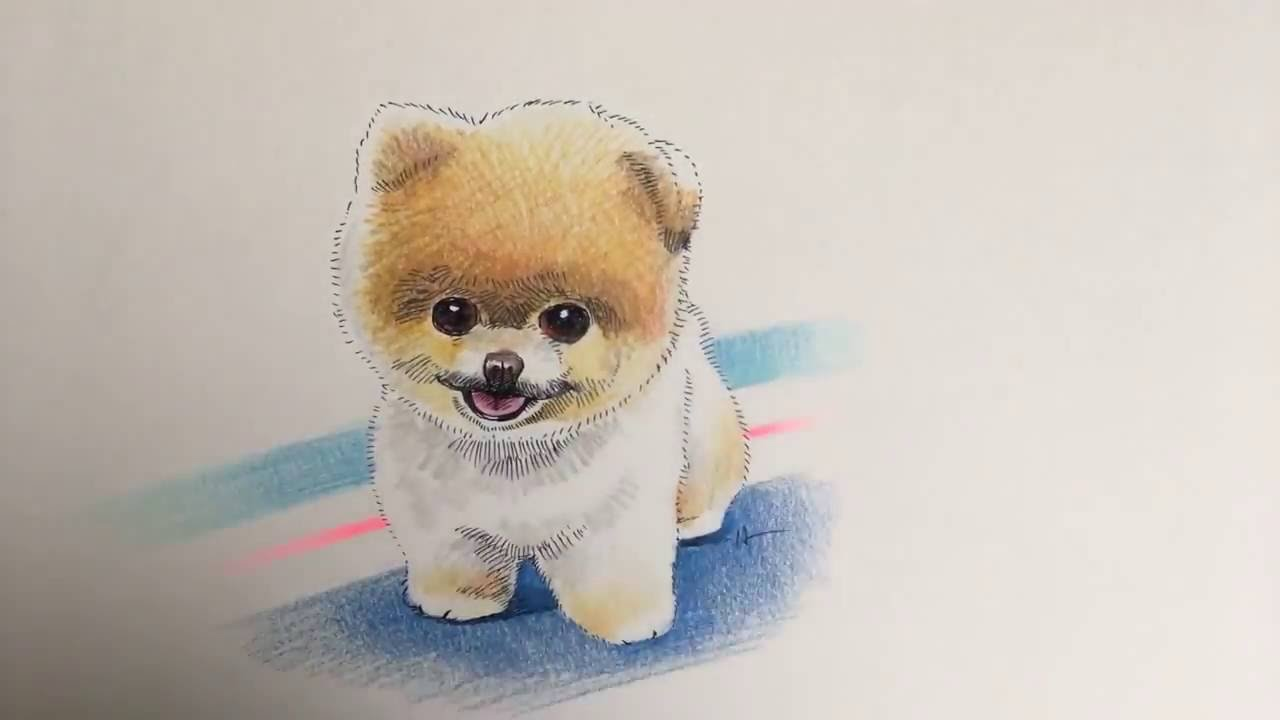 drawing a pomeranian from scratch with color pencils