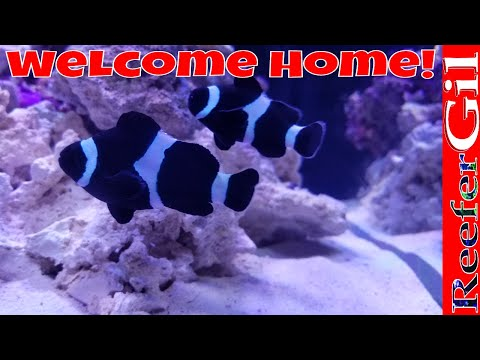 A Story About My ClownFish. Enjoy.
