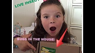 Open immediately .... Live insects!  Are they dead? Unboxing Live Butterfly Garden