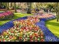 الدنيا ربيع .. 5 وجهات في مايو 2018 لعشاق موسم الورود