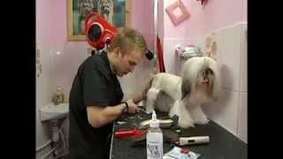 Грумер заробляє на одній собаці 300 грн