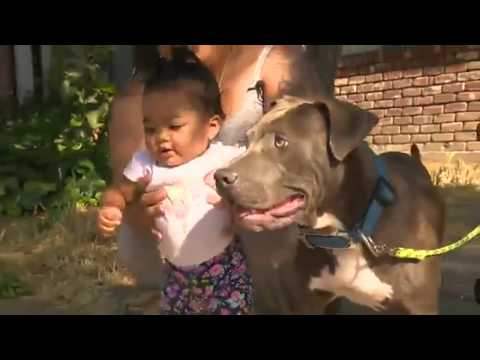 Hero Pit Bull Rescues Baby from Fire