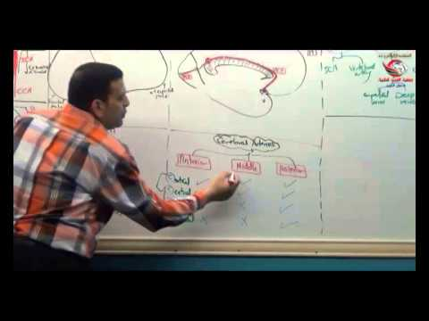 Dr Ahmed Elzainy Arterial Supply of brain Neuroanatomy   الدكتور احمد الزيني
