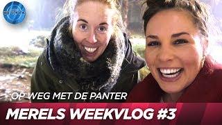 Eindelijk familiebezoek   Op weg met de panter #3   UTOPIA (NL) 2018