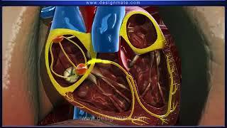Свертываемость крови урок в формате 3D Mono