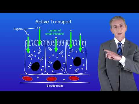 GCSE Science Biology (9-1) Active Transport