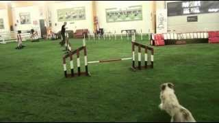 Mig's 10th Agility Session And The First Course Training.