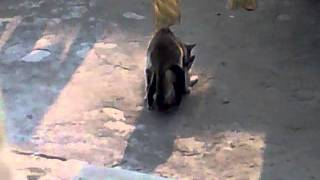tenage cat sex by akash.mp4