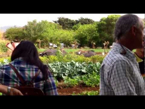 Farm Tour and Kupu Maui Dinner at Kupa'a Farms 10/20/12
