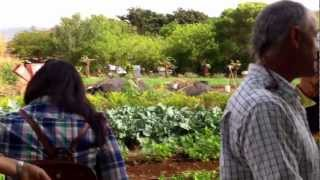 Farm Tour and Kupu Maui Dinner at Kupa'a Farms 10/20/12