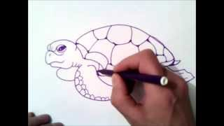how to draw a sea turtle step by step | how to draw a sea turtle