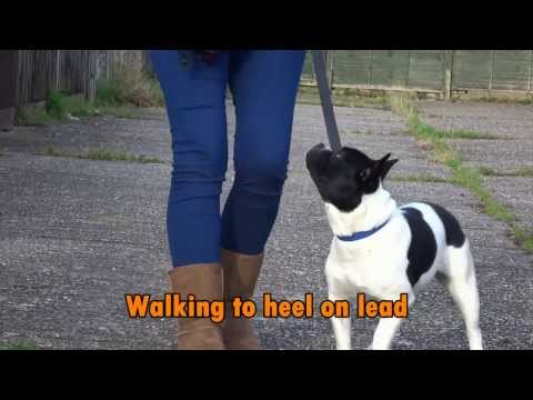Pixie - Stubborn French Bulldog - 6 Week Residential Dog Training