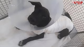 Rescue of a Wounded Puppy with Heart Broken