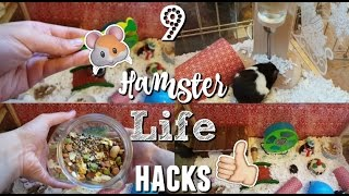 9 hamster life hacks that will help you and your hamster