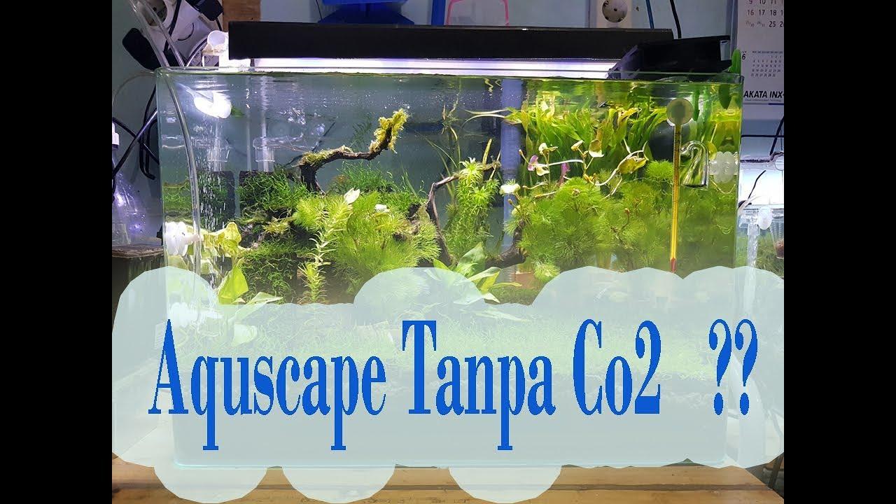 Aquascape TANPA Co2, Kok bisa Yaa ??!?? - YouTube