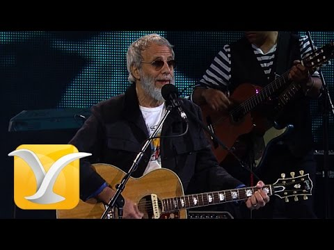 Yusuf Cat Stevens, Oh Very Young, Festival de Viña 2015 HD 1080p