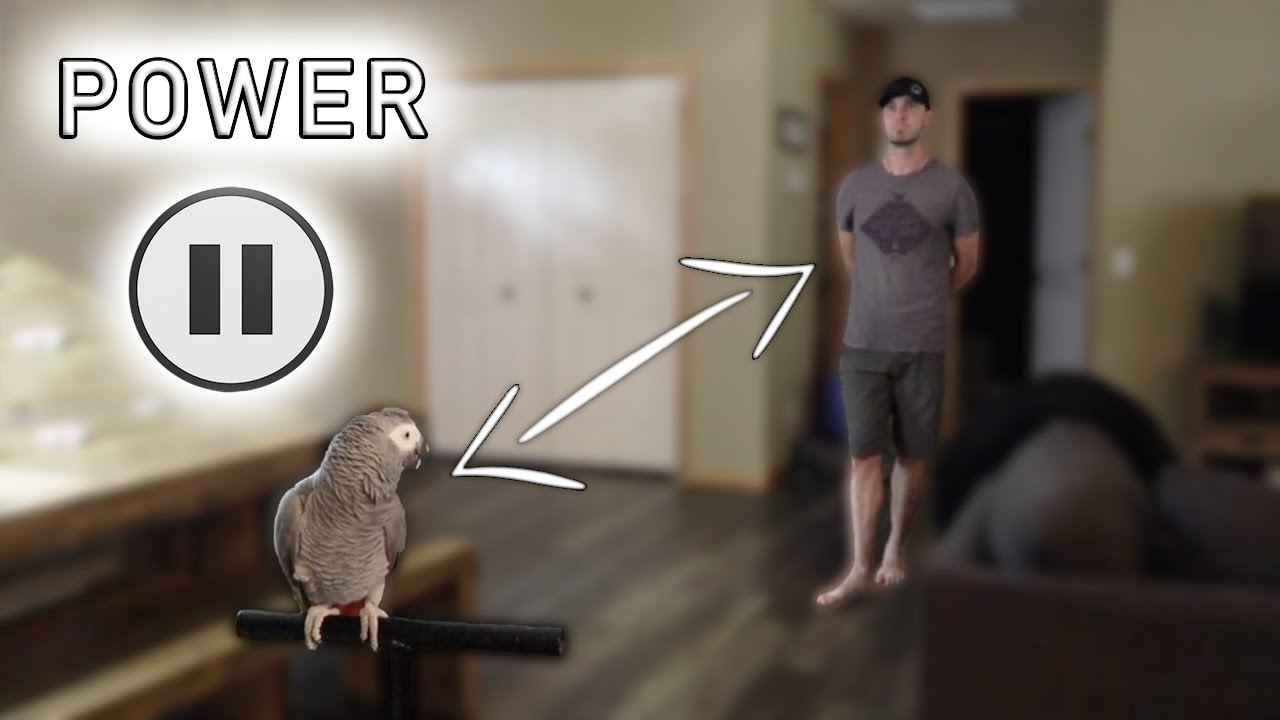 How to Get CLOSE To Your TERRIFIED Bird | The Power Pause Training Technique
