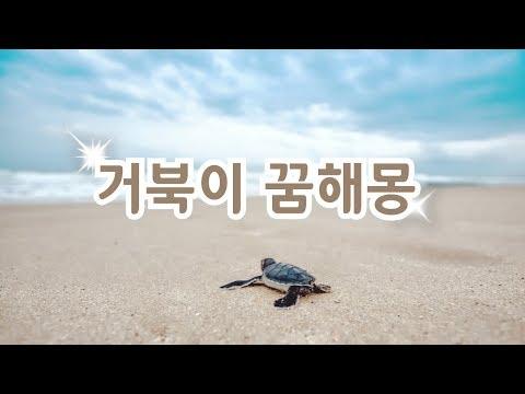 꿈속에서 거북이가 보였다면??다양한 거북이 꿈해몽~♡