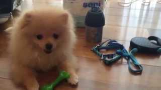Вольер и переноска для собаки