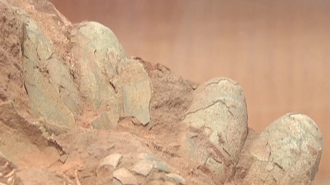 5-dinosaur-eggs-were-just-discovered-at-a-construction-site-in-china