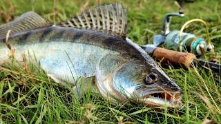ЛУЧШИЕ УЛОВЫ ЛЕТА 2021 года Летняя рыбалка 2021 года итоги