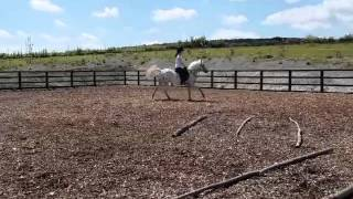 Wonderful jumping pony.