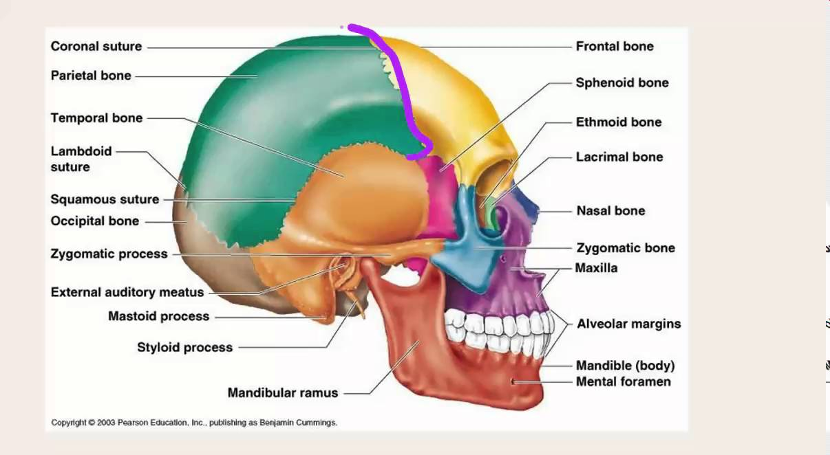 Medstar Temporal Region Youtube