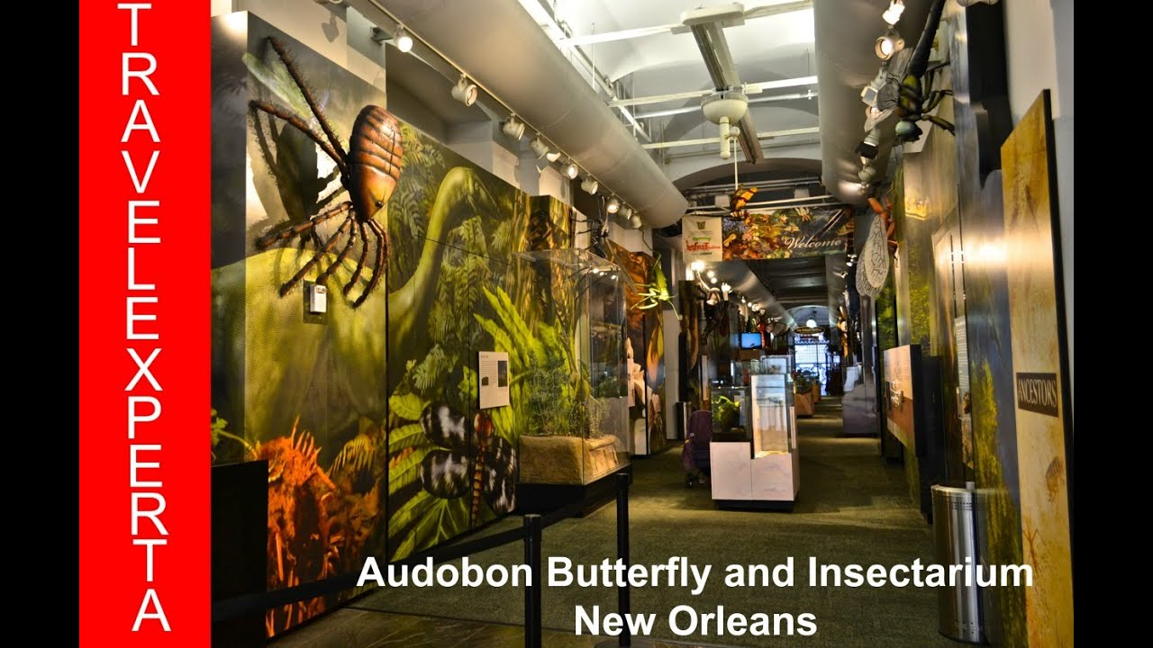 Audubon butterfly garden and insectarium coupons