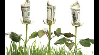 Why some cultures grow wealth and others do not