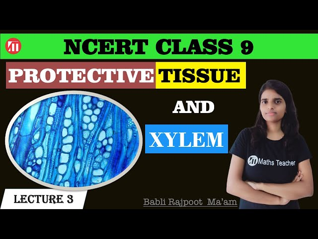 Tissues (Lecture 3) | Difference between Parenchyma,Collenchyma and Sclerenchyma | Protective Tissue