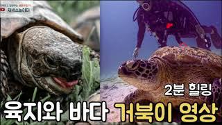 육지 & 바다 거북이 힐링 영상 |tortois…