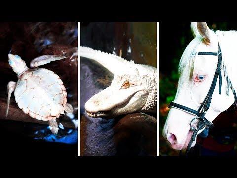 23 животных-альбиносов, увидеть которых большая удача