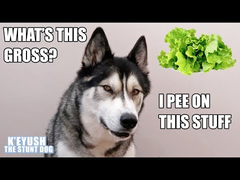 Talking Dog Reviews Different Food ASMR