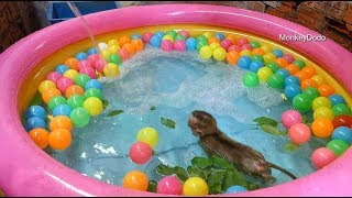 Wow Awesome Baby Dodo Run To Kiss Mom While He Swimming In Colorful Tube