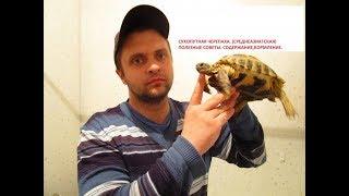 Черепаха Среднеазиатская  Содержание, Кормление, Советы