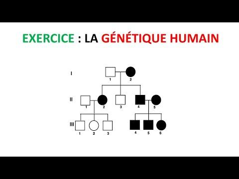 exercice 2ème bac Svt international génétique