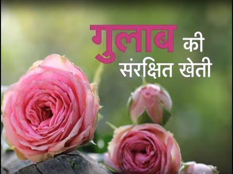 Krishi Darshan - उन्नत कृषि तकनीकियाँ | Innovative Farmer | गुलाब की संरक्षित खेती
