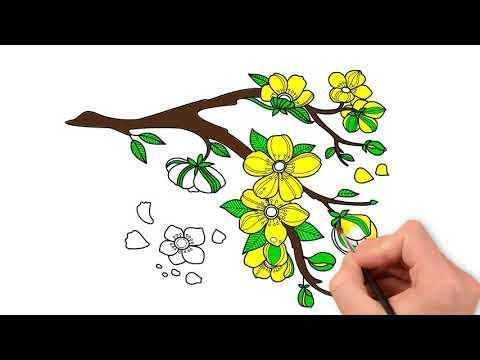 Vẽ Hoa Mai - Tranh Tô Màu Các Loài Hoa