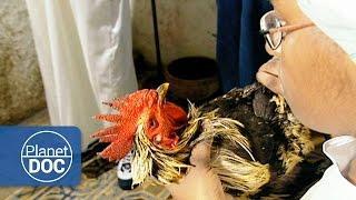Santeria (Regla de Ocha) Documentary
