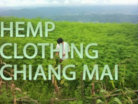 The Upcoming Industry of Hemp Production Clothing, Chiang Mai Thailand