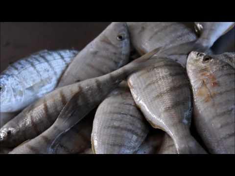 Fish market Cape Verde