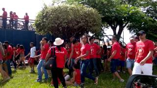 Folia do Divino Formosa Go 2015
