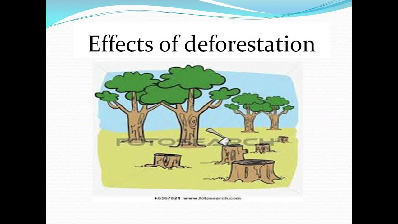 effects of deforestation essay Unlike most editing & proofreading services, we edit for everything: grammar, spelling, punctuation, idea flow, sentence structure, & more get started now.