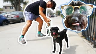 I Let My Dog Walk Me For A Day! thumbnail
