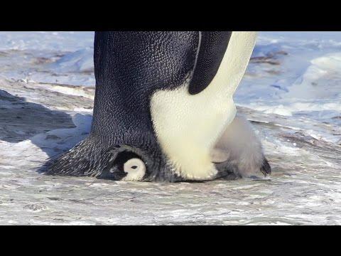 Penguin stuff