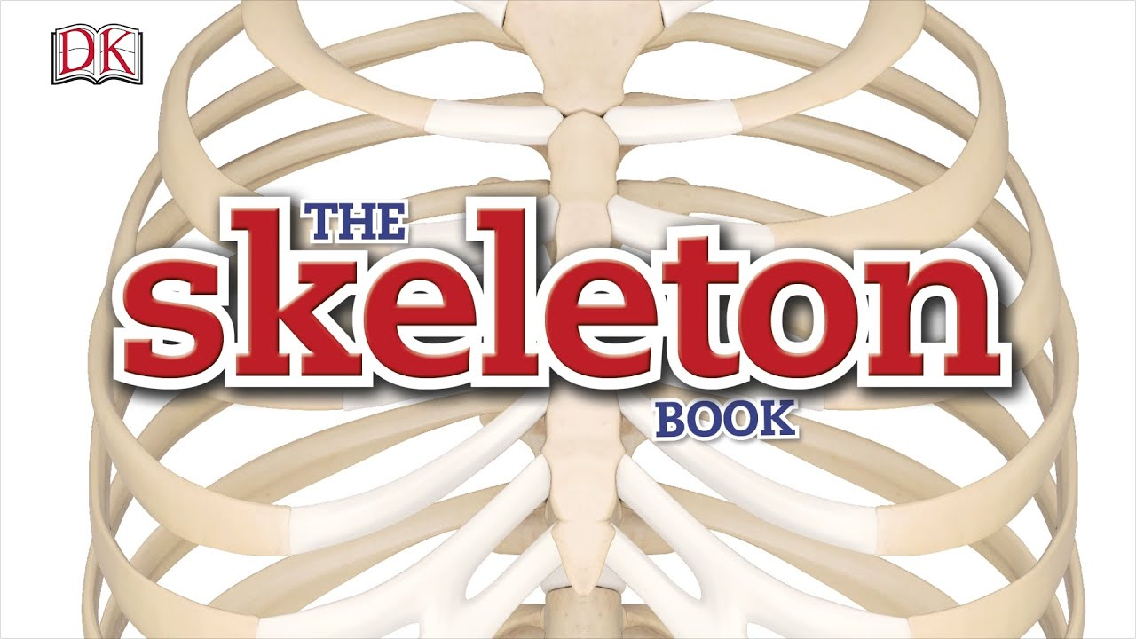 Bones and muscles homework help | Skeleton and muscular