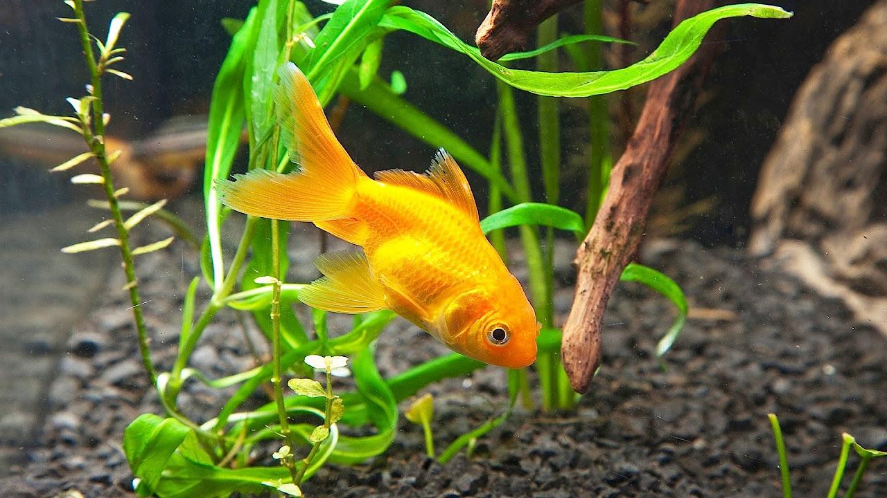 Juwel aqua clean aquarium fish tank gravel - Juwel Aqua Clean Aquarium Fish Tank Gravel