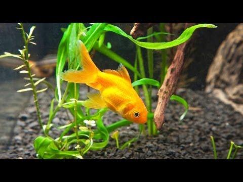 How to Clean Fish Tank Gravel | Aquarium Care