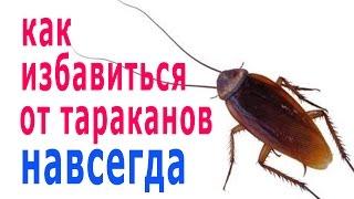 видео Борьба с тараканами - самые проверенные средства и методы