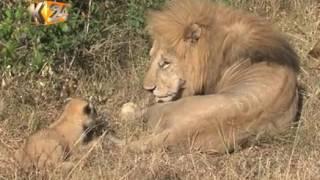 Maelfu ya watalii wazuru Maasai Mara kushuhudia safari ya kongoni